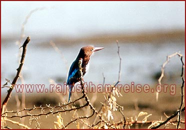 Birds in Bharatpur National Park, Rajasthan