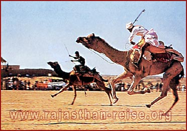 Camel Race in Rajasthan