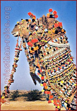 Fully Caparisoned Camel, Jaisalmer, Rajasthan